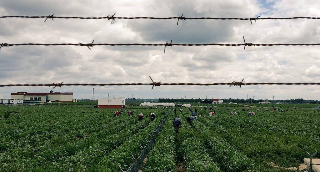El pasado 16 de mayo varios medios se hicieron eco de la grave situación de precariedad y abusos sexuales en la que se encuentran las trabajadoras en los campos de…