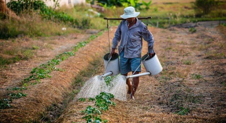 El pasado 6 de abril se anunció un Real Decreto por parte del gobierno mediante el cual tratará una vez más de salvar a los explotadores y grandes terratenientes. Este…